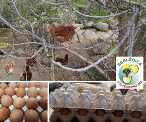 Huevos ecológicos a granel